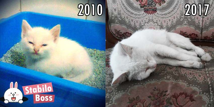Bilo then and now